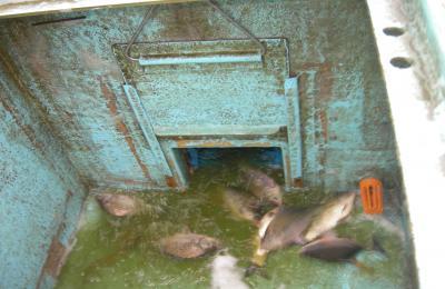 2012,11月池1