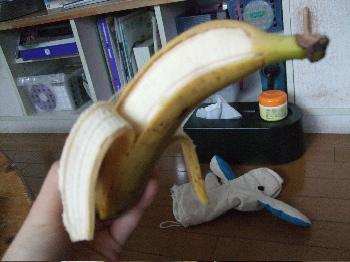 8:31バナナいるか