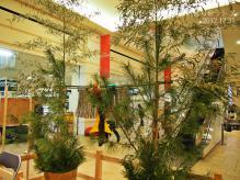 2012安藤家の正月飾り2
