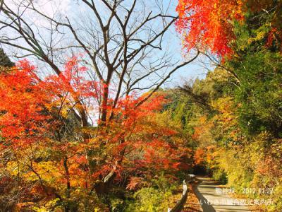 11月28日龍神峡3