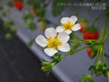 20121230アグリパークいわき7