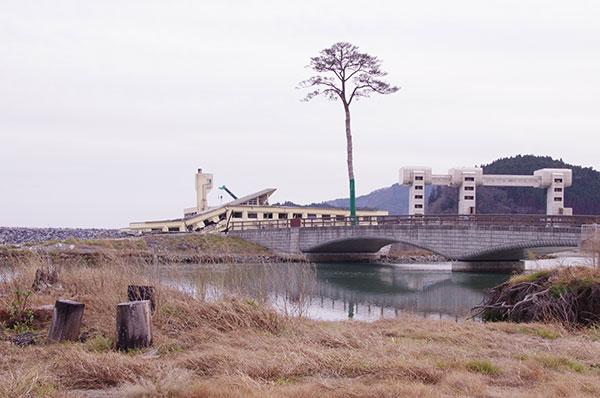 陸前高田の一本松