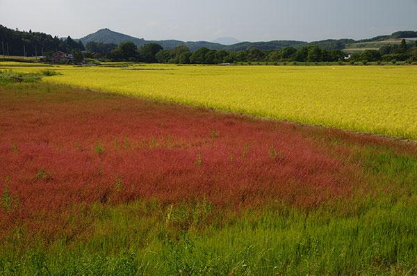 大迫町亀ケ森の赤い草原
