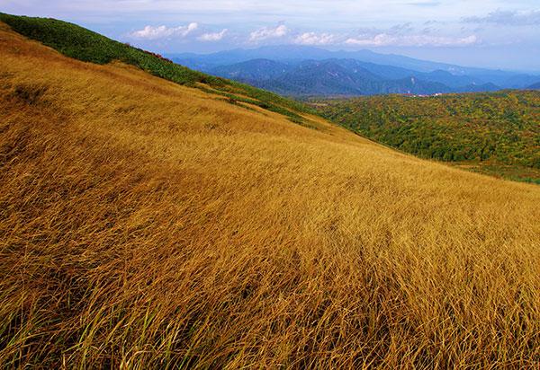 秣岳の草原