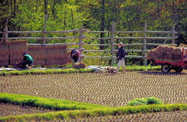 葛巻町の農作業風景