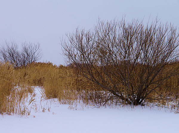 石狩川冬景(1)