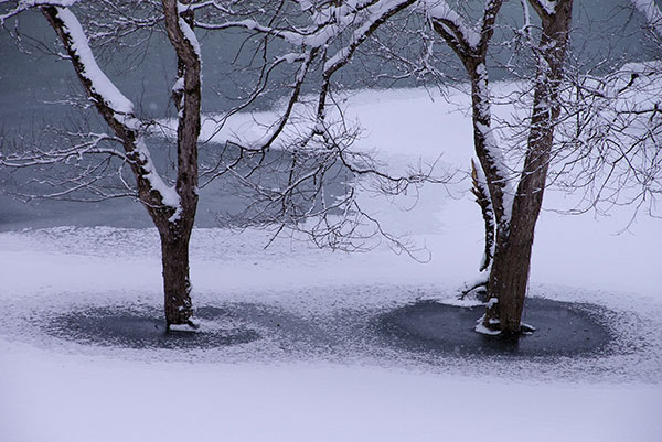 焼地台公園の湖面樹