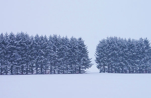 花巻郊外の雪原