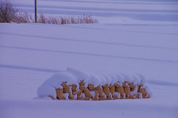 雪田にねむる