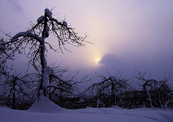 りんご園の冬