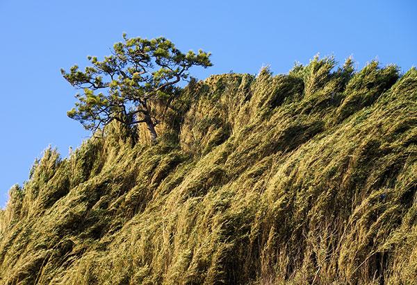 三崎のササ林