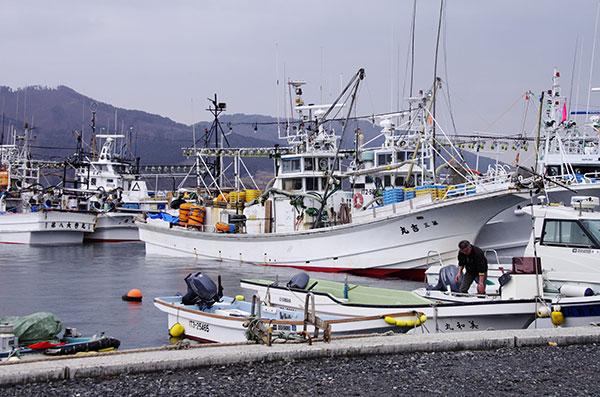 大船渡港の漁船