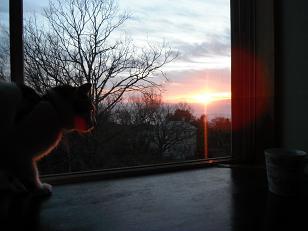 朝日とチャオ 小