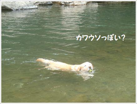 今日も泳ぎました♪