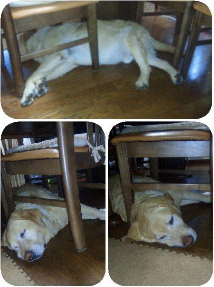 何故に椅子の下に頭?