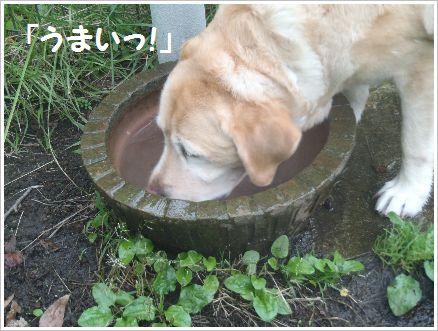 鮎沢PAドッグラン