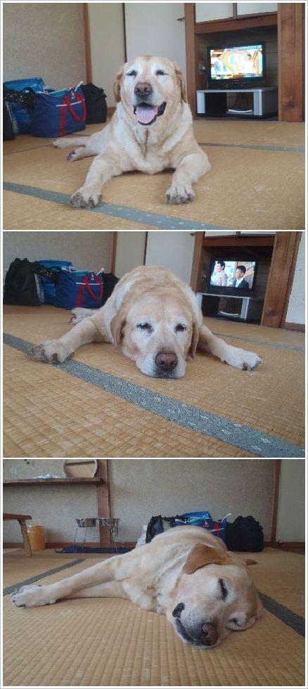 畳の上で寝るのは初めてやねん♪
