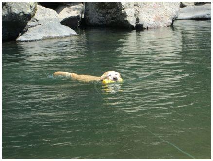 ほんとは泳ぎもうまいんだぜぇ~♪
