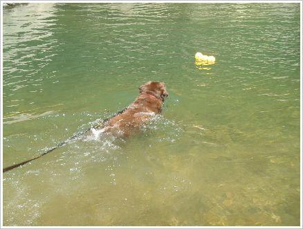 泳げるやん♪ ヤッタネ!