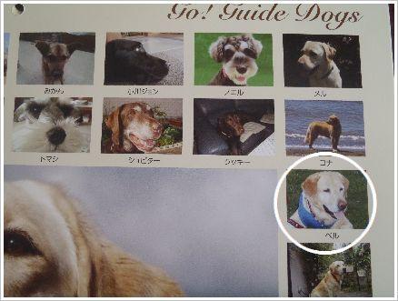 2013年も盲導犬応援団の一員です♪