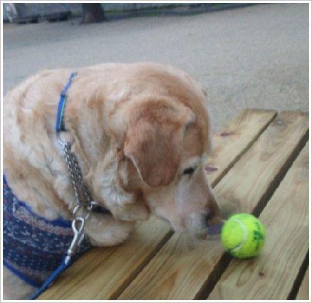 ボール捜査名犬?