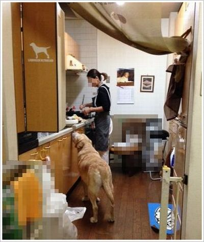 キッチン大好き?_