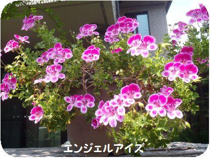 P5180011.jpg
