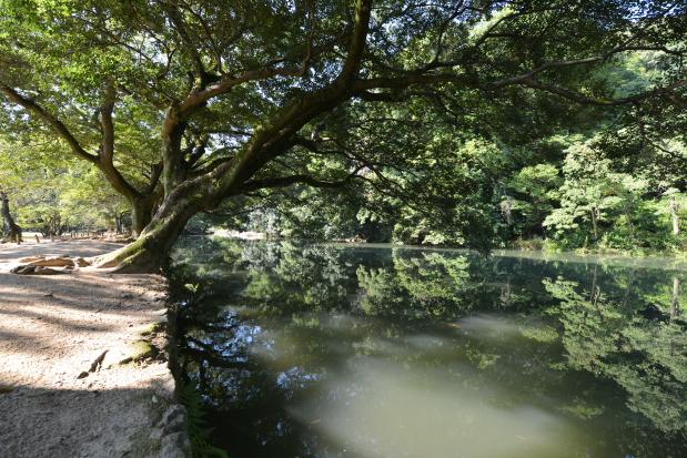 朝日射す栗林公園