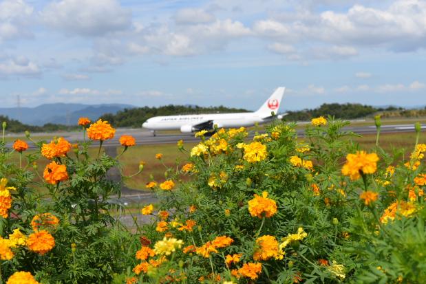 花と飛行機