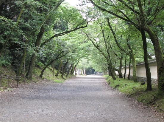木漏れ日の道3