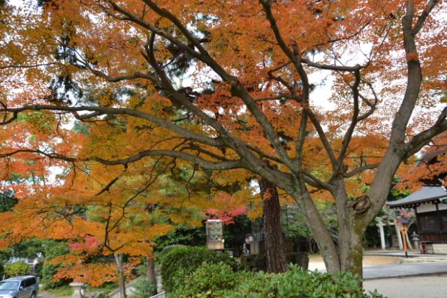 新日吉神社の紅葉