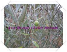 olive black (2)