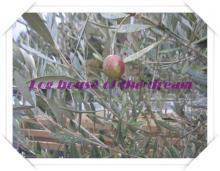 olive black (3)