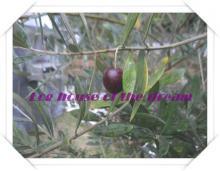 olive black (5)