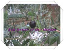 olive black (4)