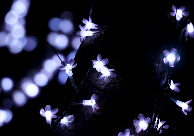 光のさくらまつり_2
