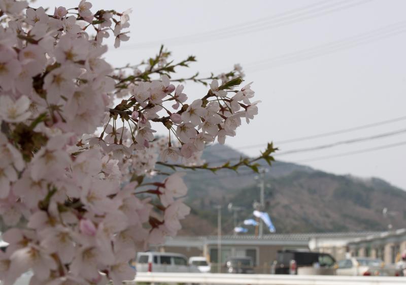 山田町_6