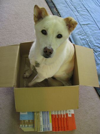 doginbox.jpg