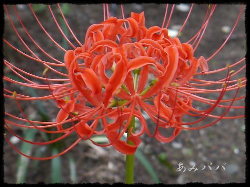 akiakaiaka (6)