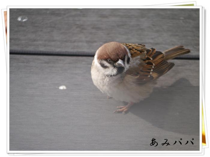 羽田 (3)