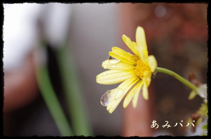 yukikiki (8)