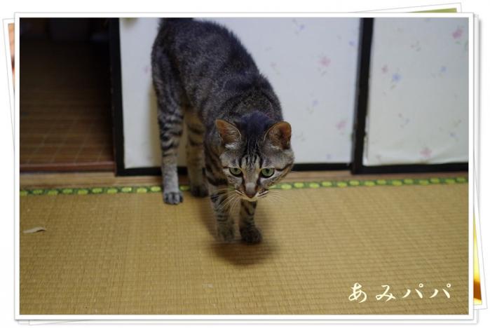 himadesu (1)