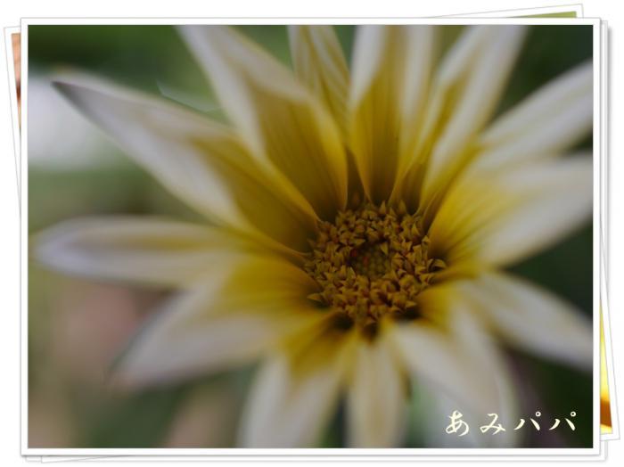 P1060141.jpg