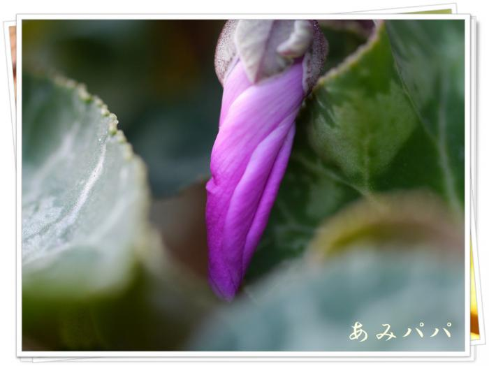 P1060145.jpg