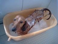 お風呂犬太郎2