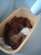 お風呂犬太郎3