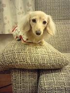 ソファーでくつろぐちゃんこちゃん