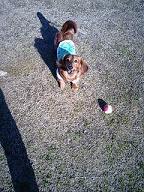 ボールと犬太郎