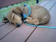 寝てる犬太郎