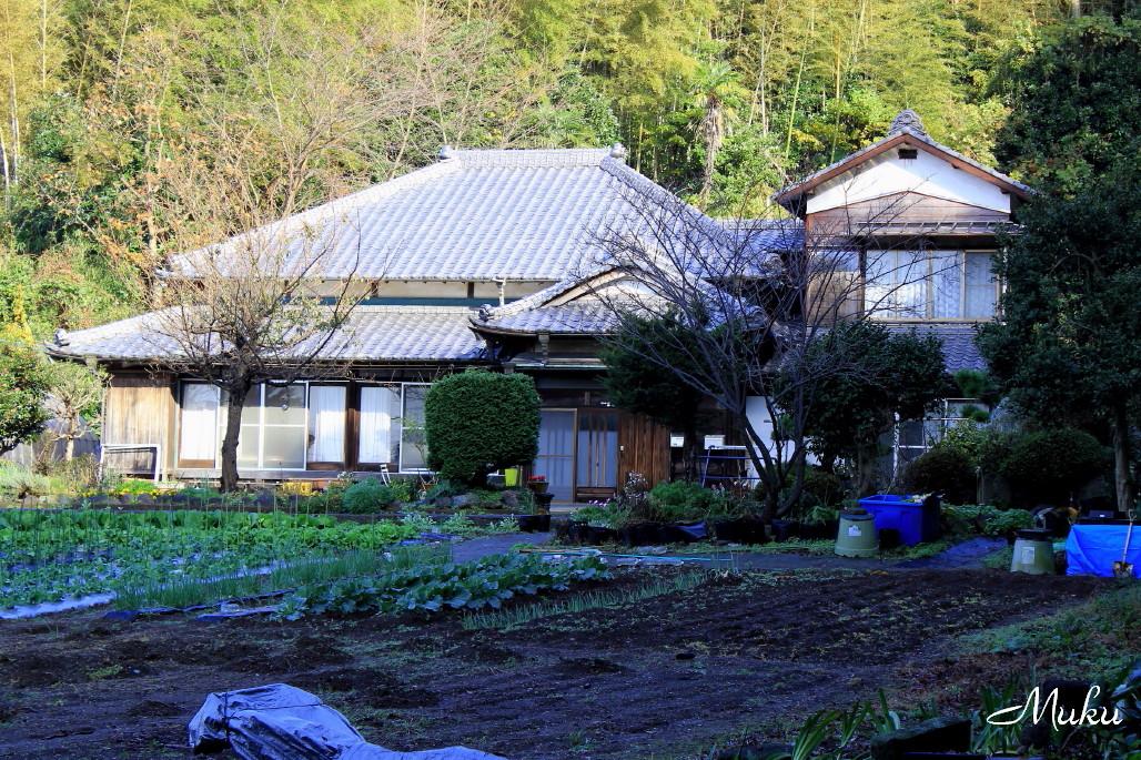 2014.11.15 里の旧家 (散歩道:神奈川県横須賀市)
